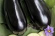 Gebakken aubergines met tomatensaus recept