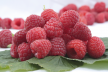 Rood fruit met merinques recept
