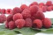 Eendenborst met frambozen recept