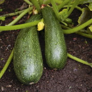 Courgette met walnoten