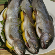 Forel met witlof en citroendressing