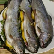 Vis Forel uit de oven recept