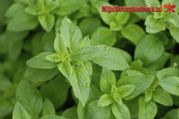 Oregano Dressing